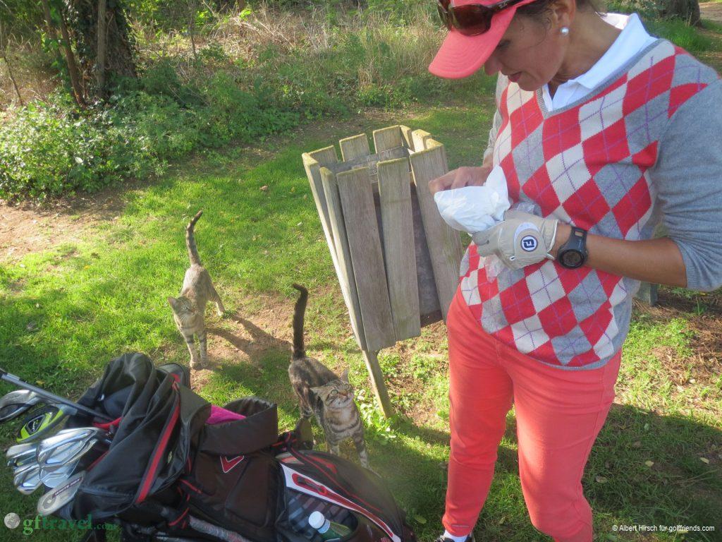 Fütterung der Raubtiere an Loch 11 von Yasmine