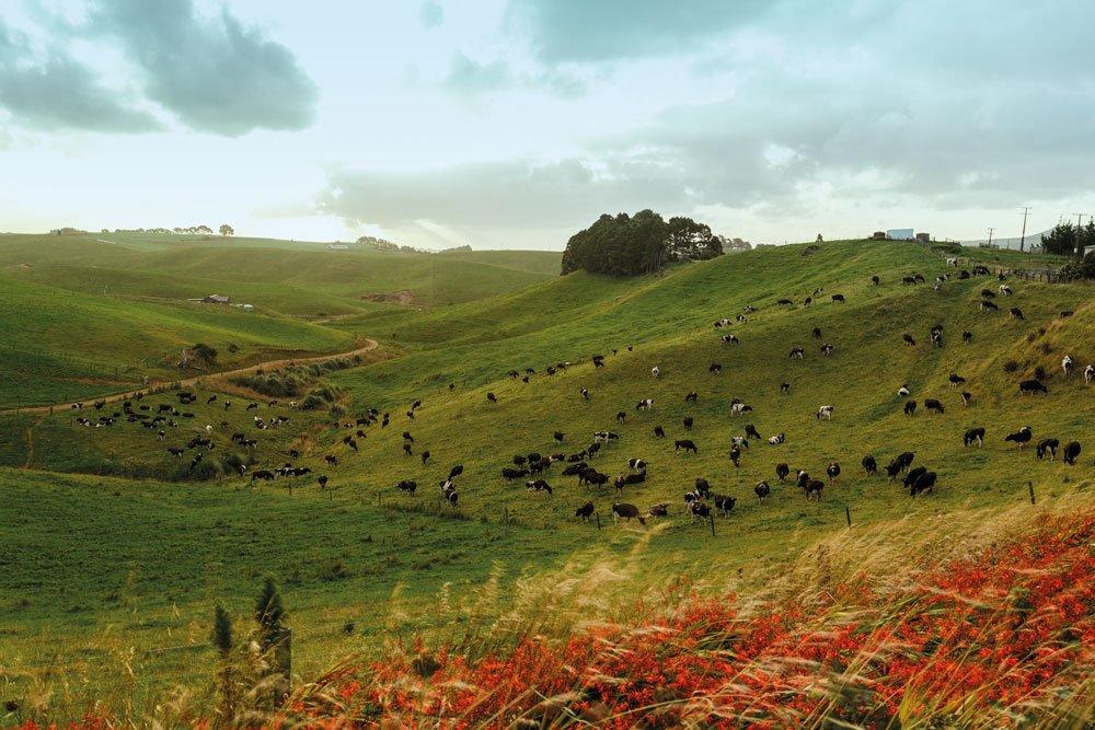 Golf-Gruppenreisen: Neuseeland (Bombay Hills lush Waikato)