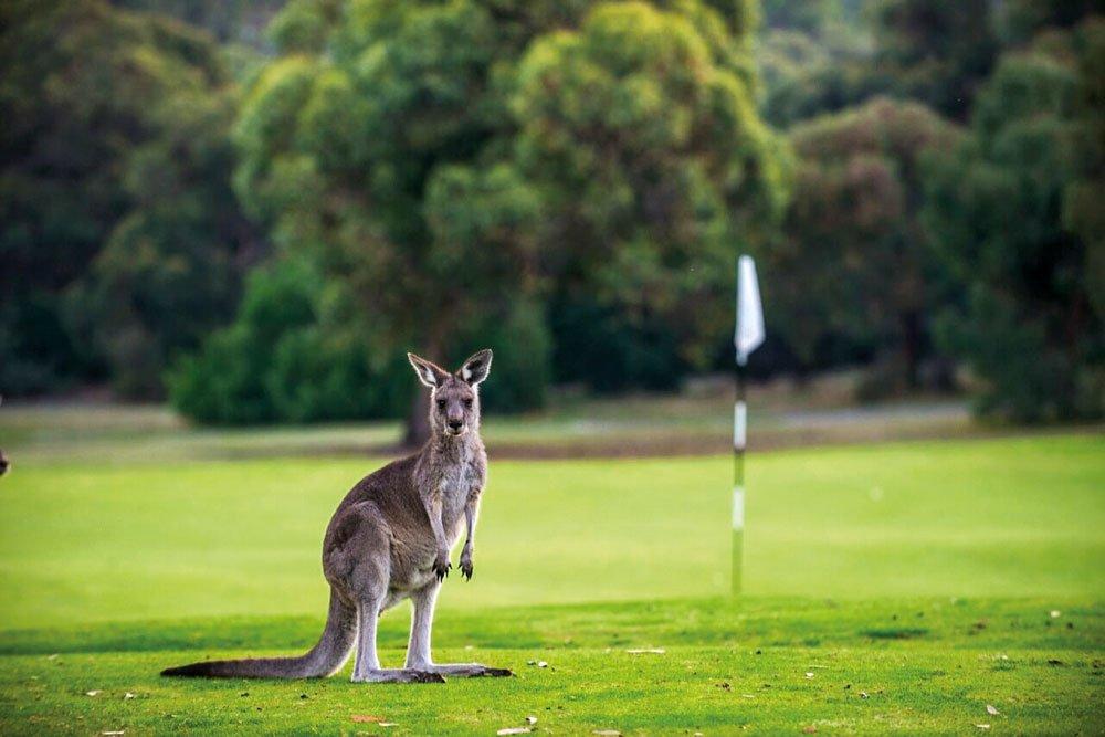 Golf-Gruppenreisen: Australien & Tasmanien (The Anglesea Golf-Club)