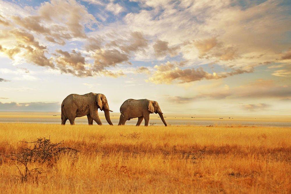 Golf-Gruppenreisen: Südafrika Golf pur (Safari, Elefanten)