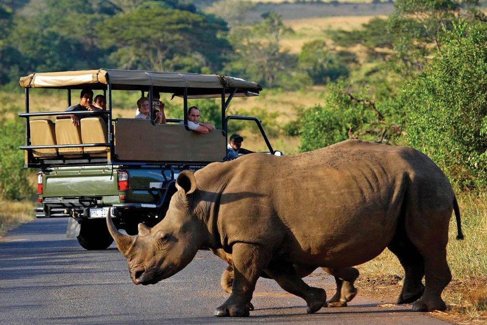 Golf-Gruppenreisen: Südafrika (Safari, Nashorn)